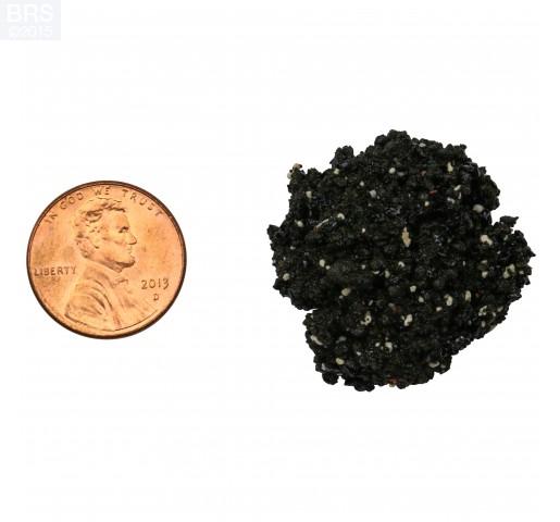 Hawaiian Black Arag-Alive! Live Reef Sand Bag