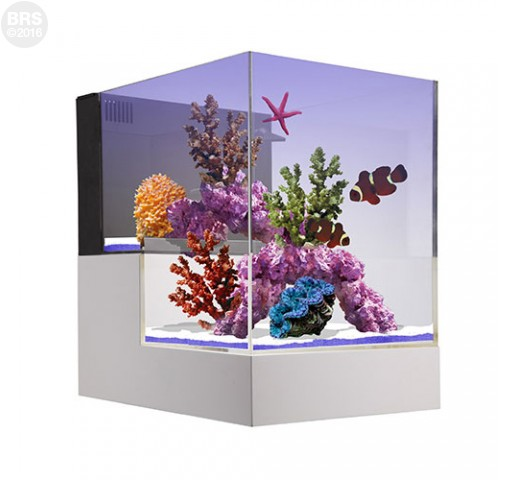 Nuvo Concept Abyss Peninsuala 20g