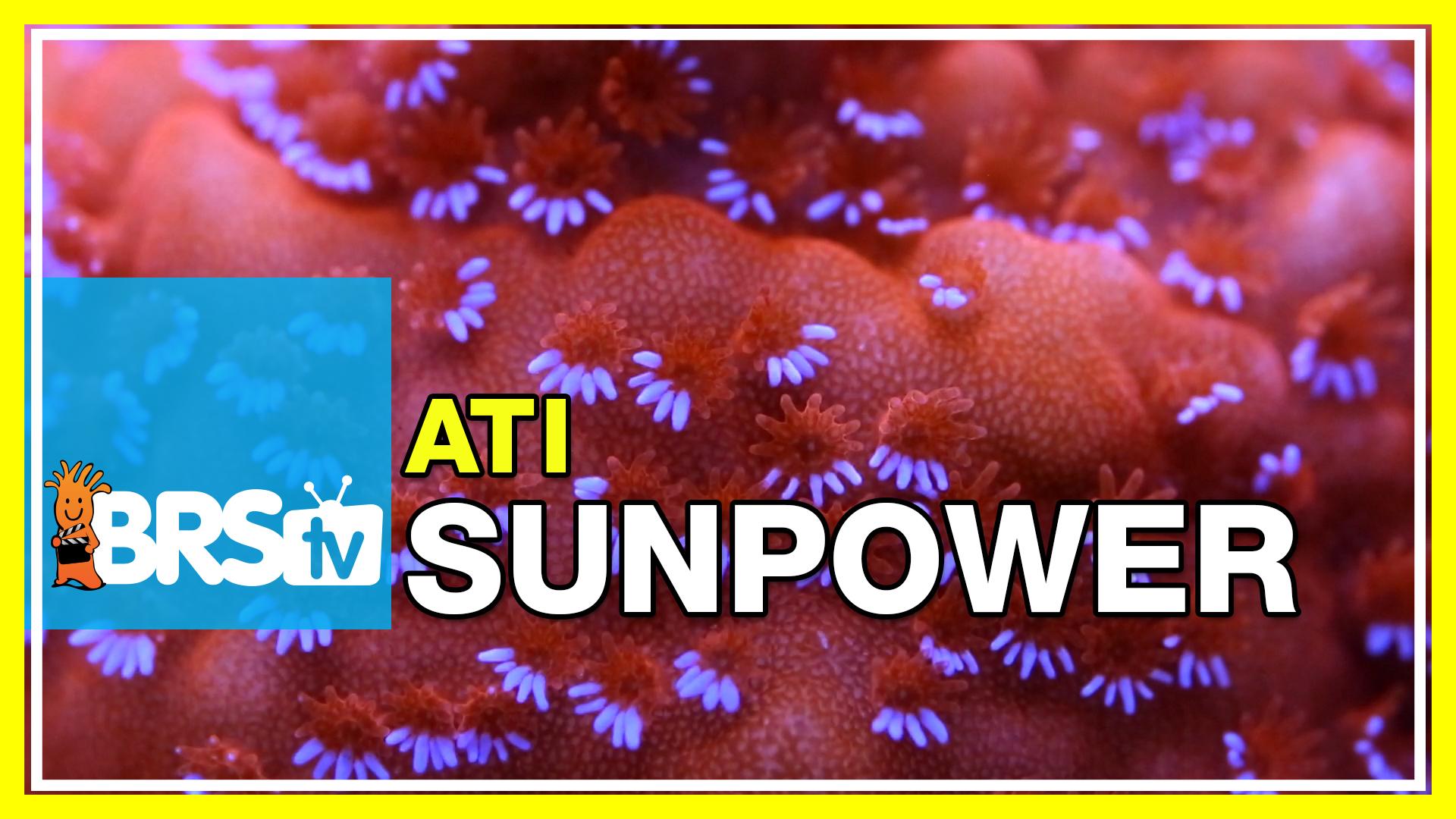 Performance Testing ATI's Sunpower T5 Fixture | BRStv Investigates