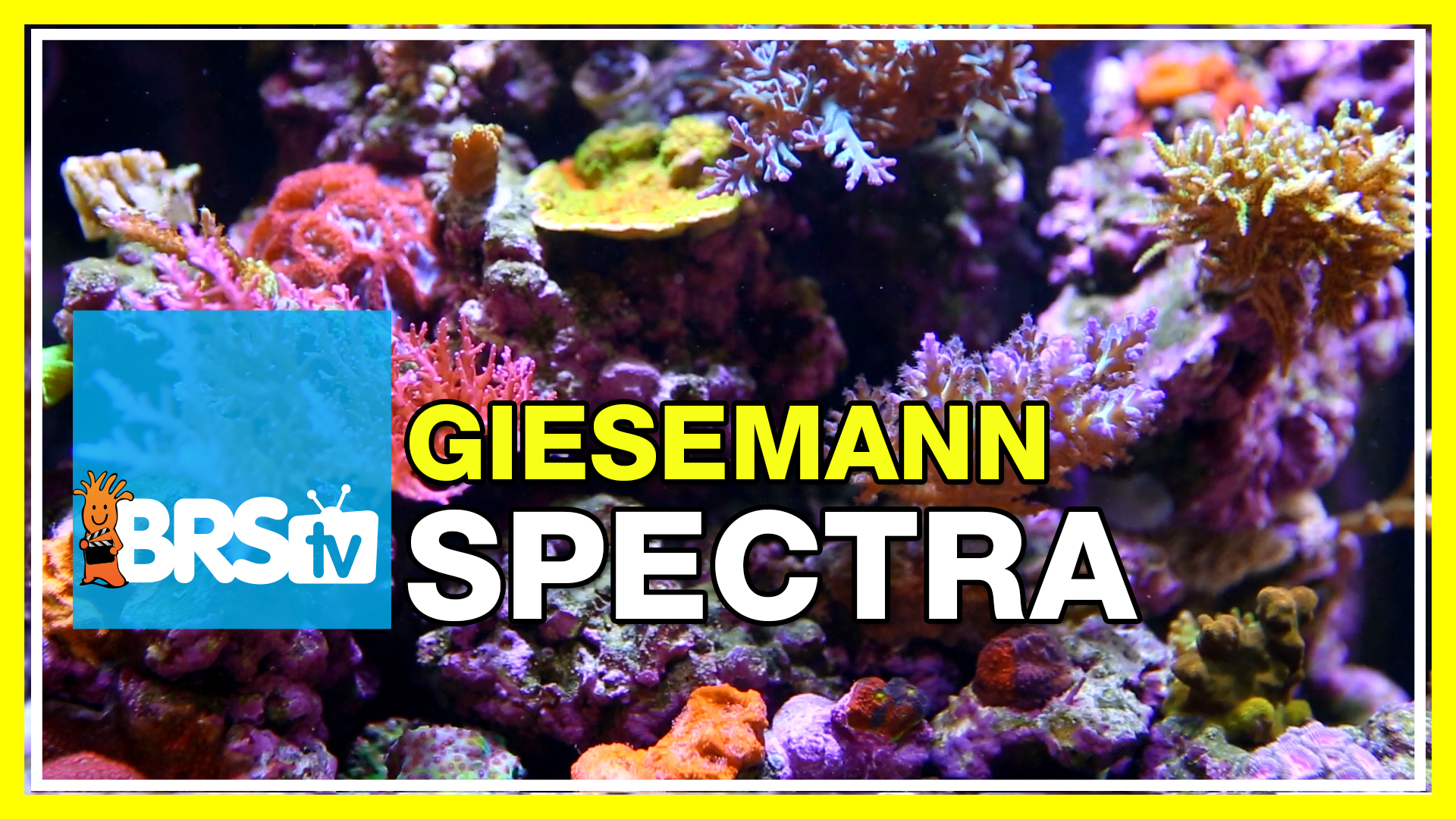 Testing the Giesemann Spectra Hybrid light fixture for SPS corals | BRStv Investigates