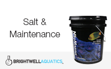 Salt & Maintenance