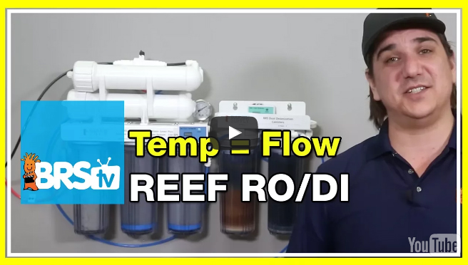 Does water temperature affect your RODI unit? | BRStv Investigates