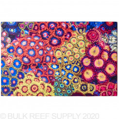 Rasta Garden Reef Art - 18 in. x 12 in. Canvas Print