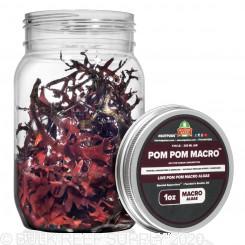 PomPom - Live PomPom Gracilaria Algae
