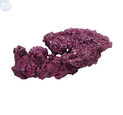 1 Project Reef Rock 2.1 - Walt Smith