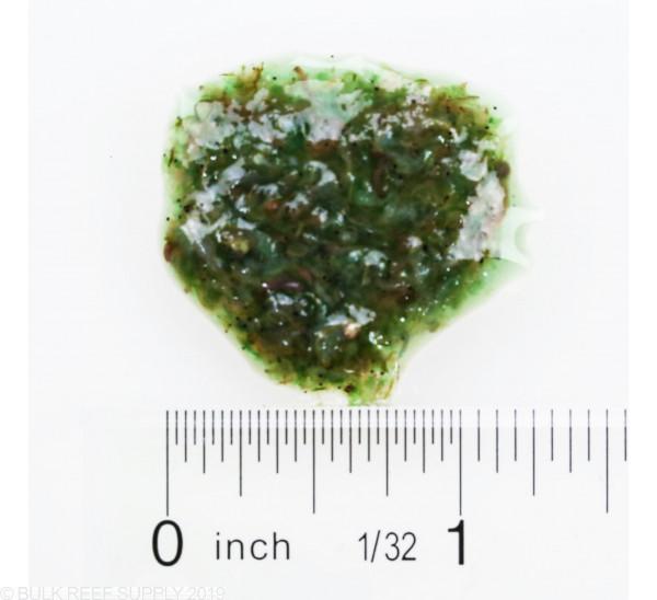 Hikari Bio-Pure Frozen Spirulina Brine Shrimp