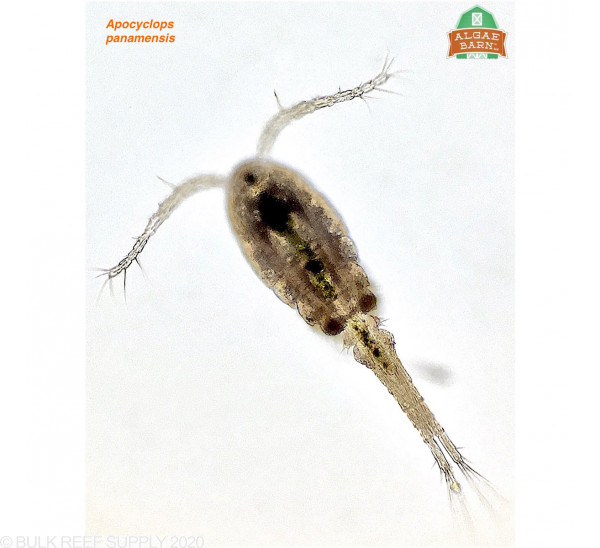 Apocalypse Pods & OceanMagik Phytoplankton - AlgaeBarn