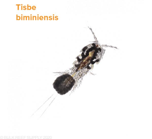 Tisbee Pods and OceanMagik Phytoplankton - AlgaeBarn