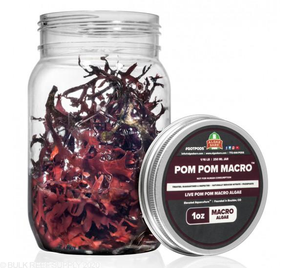 Pom Pom - Live Pom Pom Gracilaria Algae - AlgaeBarn