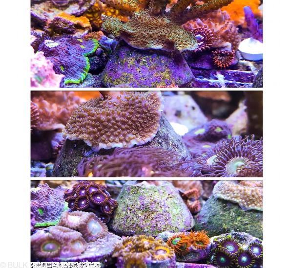 10-Pack Aquadomes - Reefsmart