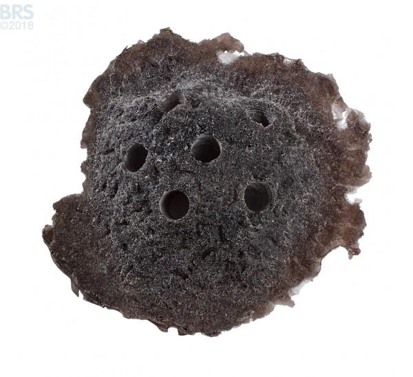 Dark Brown Sandbed Rock