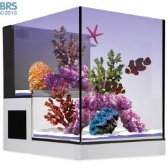 Concept Glass Abyss Peninsula 20g Aquarium - Innovative Marine