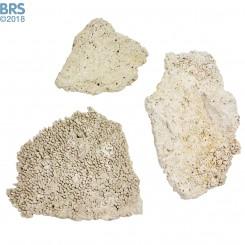 BRS Tonga Shelf (Flat Plates) Dry Live Rock