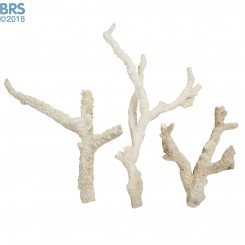 BRS Tonga Simple Multi-Branch Dry Live Rock