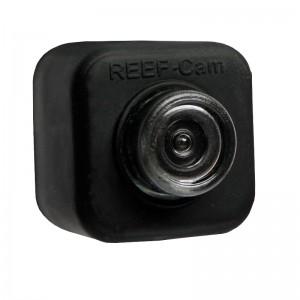 Underwater Reef Cam - IceCap (DISCONTINUED)