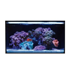 20 NUVO Fusion AIO Aquarium (Tank Only) - Innovative Marine