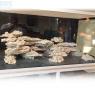 Reef Saver Shelf Aquarium Dry Live Rock