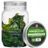 Clean Sea Lettuce - Live Ulva Lactuca Algae - AlgaeBarn