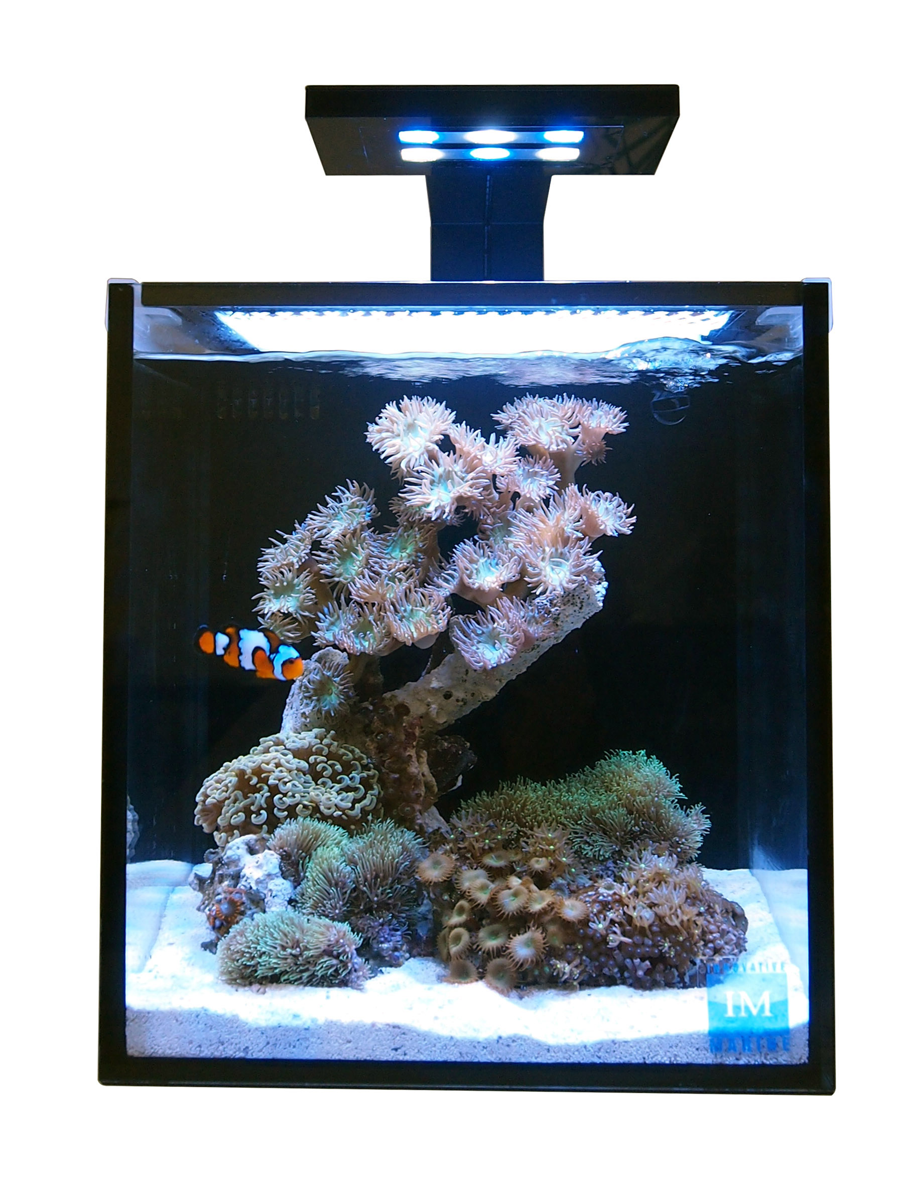 10 NUVO Fusion Tank with SKKYE LED Light Innovative Marine Bulk