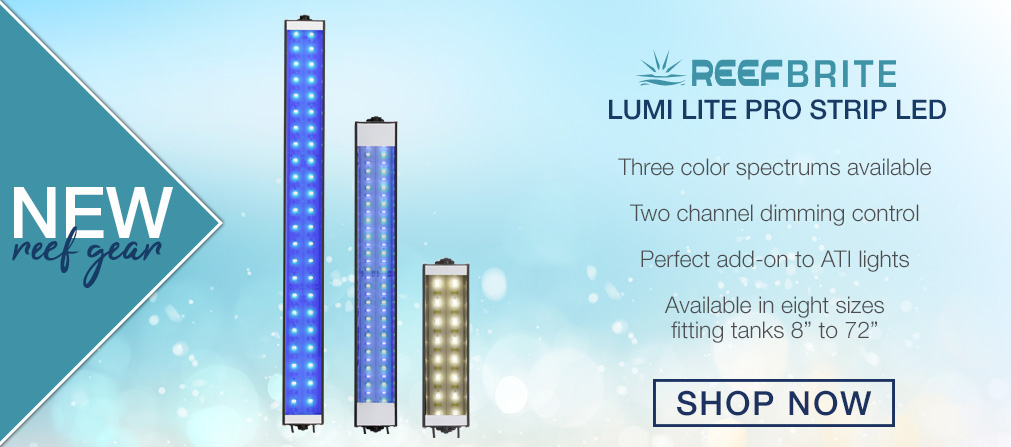 New Reef Brite Lumi Lites