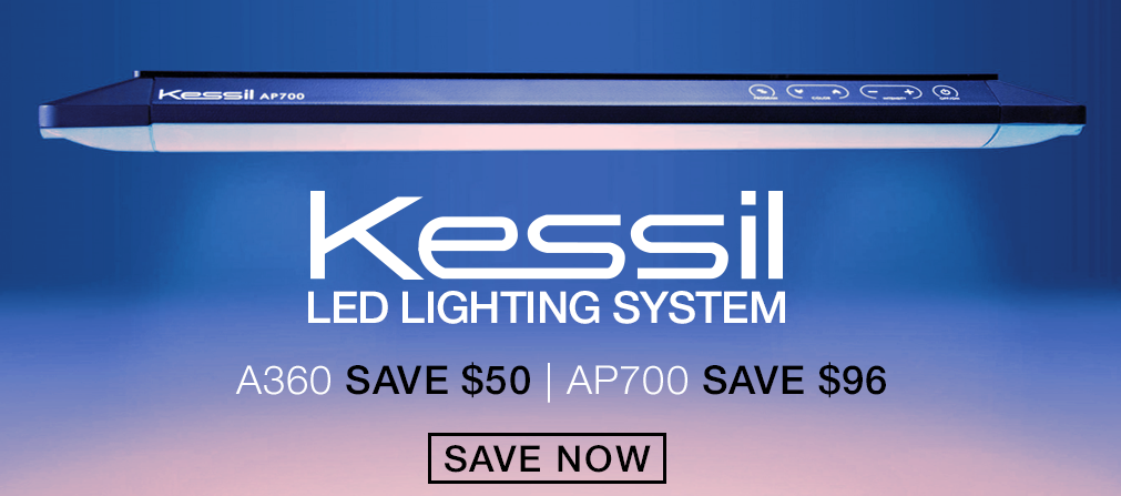 Kessil Winter Sale