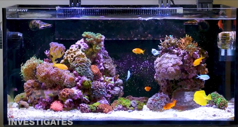 Full Tank Shot Clear Water